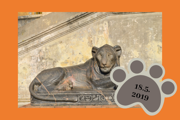 leijonaemot ry:n kevätkokous 2019