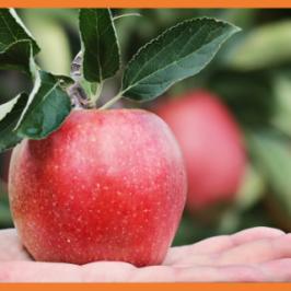 punainen omena avonaisella kämmenellä