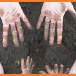 aikuisen ja lapsen multaiset kädet