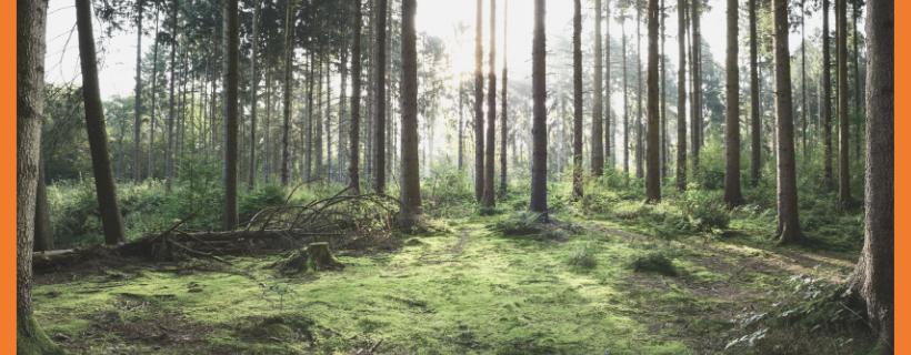 Perhe edellä puuhun – Minun tarinani